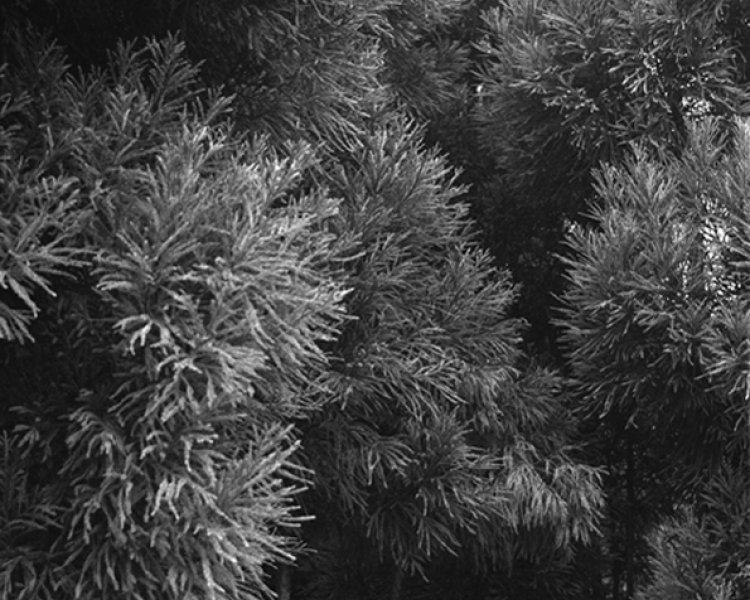 Awoiska van der Molen: Delicate and profound