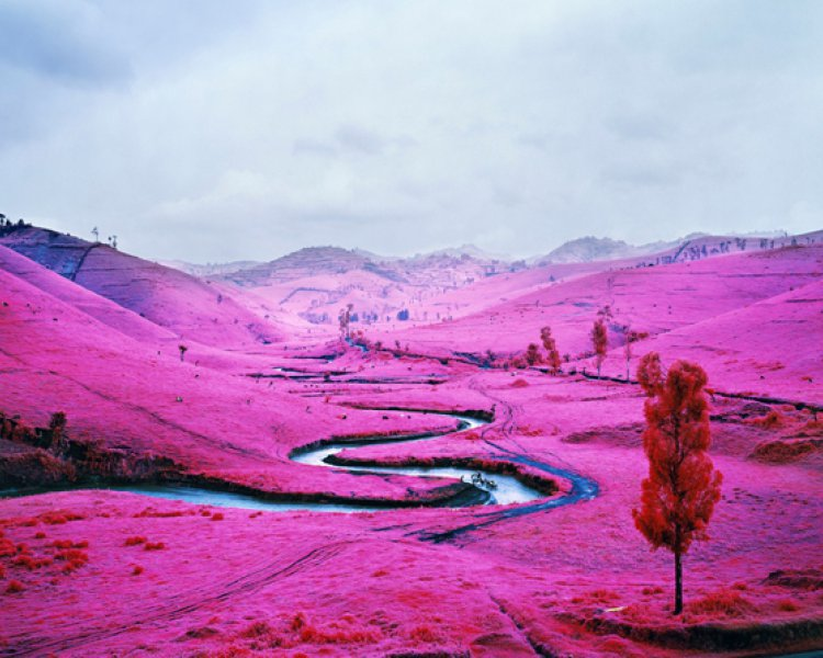Richard Mosse: A grim fairy tale