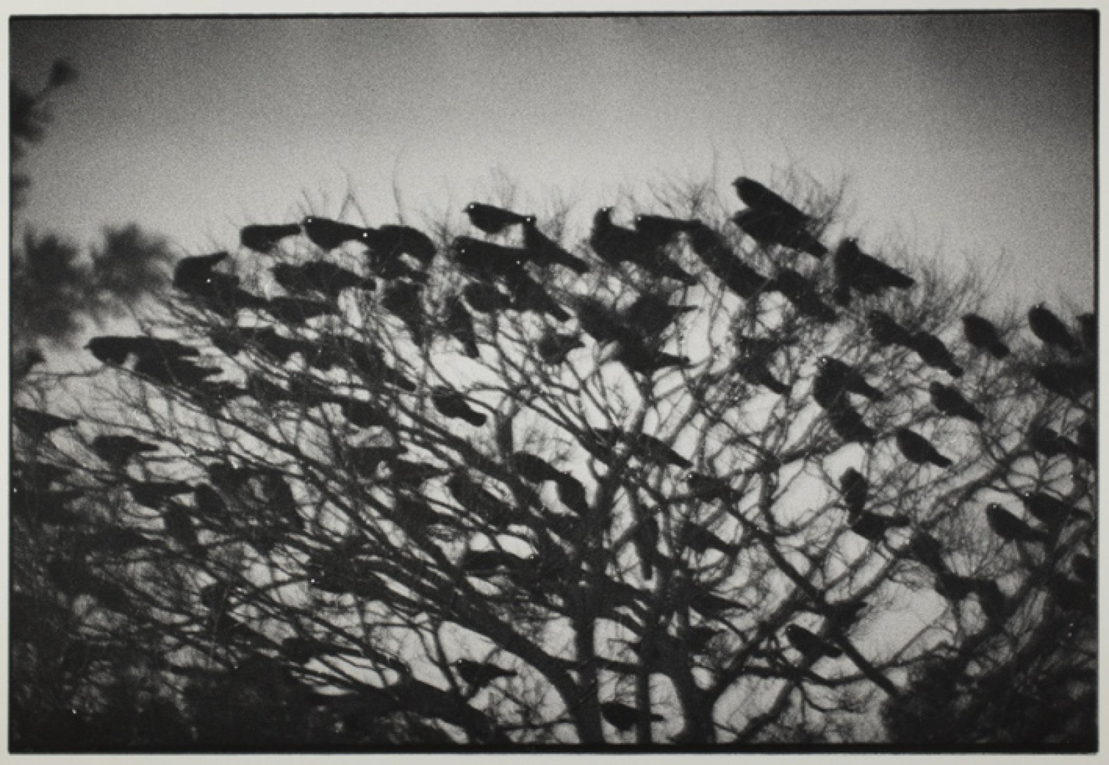 Kanazawa 1977, from the series Ravens © Masahisa Fukase Archives