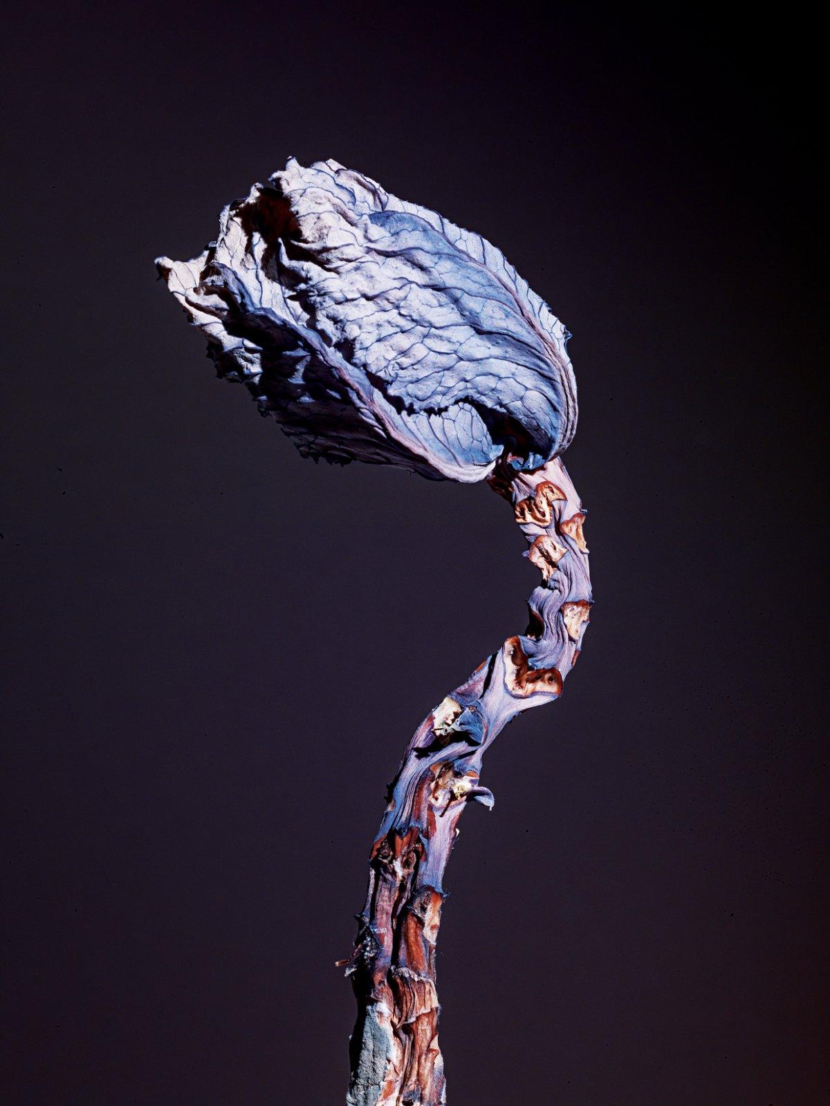 Maldoror, 2014 © Jean Vincent Simonet