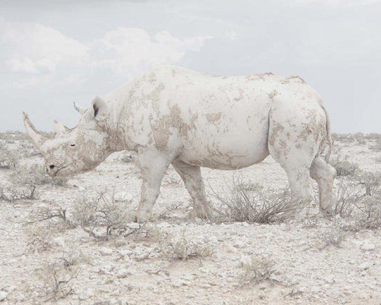 Maroesjka Lavigne wins Grand Prize in BigPicture PhotoCompetition