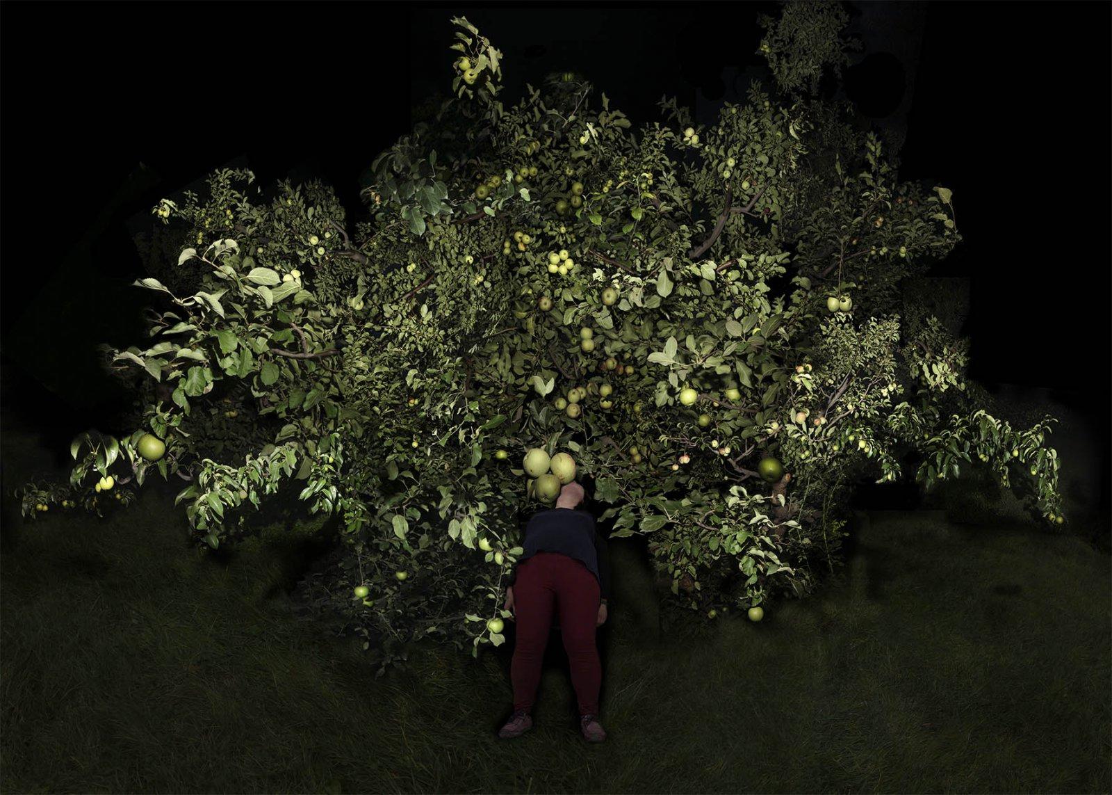 Tree- 1, 2014-2015 © Fan Xi