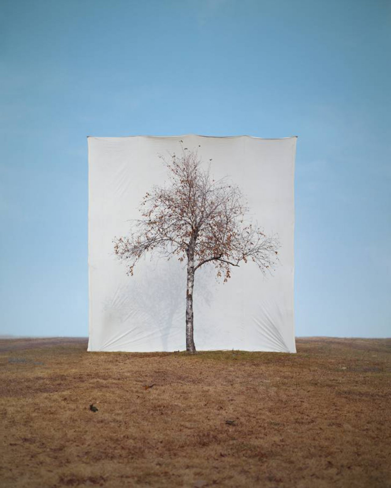 Tree #1, 2007 © Myoung Ho Lee