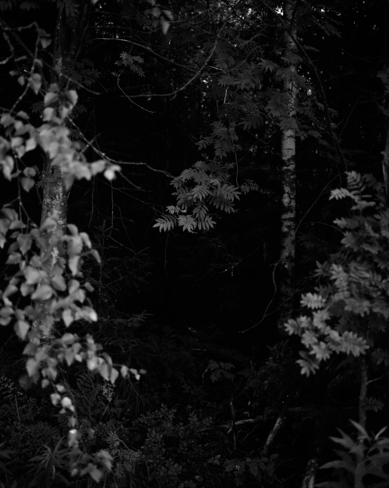 Untitled (Dark Forest), 2009 © Grant Willing